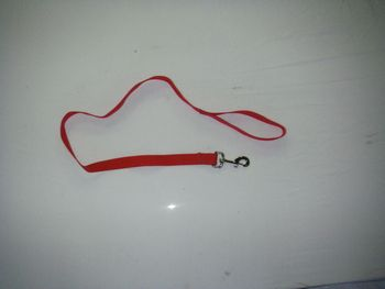 Dog Leash 1 in Polypro Webbing